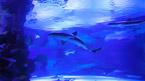 Antalya Aquarium - Voidaan varata ennen matkaa